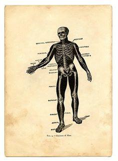 Instant Halloween Art Printable Download - Black Skeleton Man - The Graphics Fairy