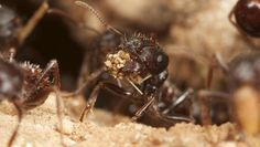 Could ants change the course of climate change? - CBS News