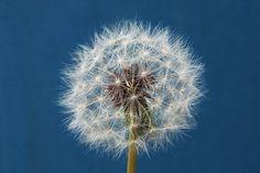 Make a wish (shot w/ #Sony a77)