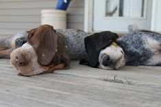 Dogs at Rest | Content in a Cottage