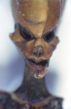 The Atacama humanoid's face.