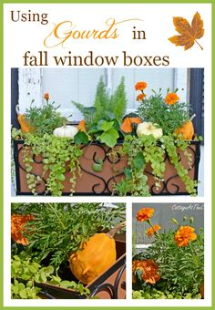 Using Gourds in Fall Window Boxes