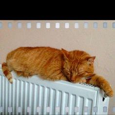 My ginger tabby cat!!