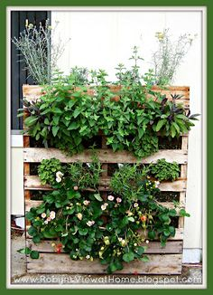 How Does Your Garden Grow? Plus, How to Make a Pallet Garden. - Robyn's View
