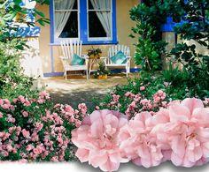 flower carpet, carpet appleblossom, carpet rose