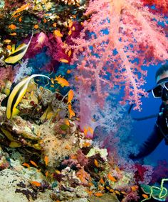 Belize Barrier Reef, Ambergris Caye