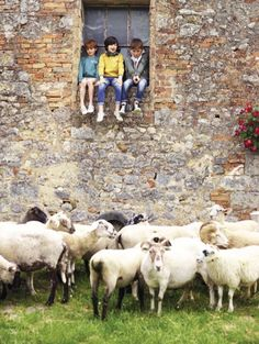 Benetton summer 2013 last season it was dogs, this season sheep, can't wait to see the next  season's shoot!
