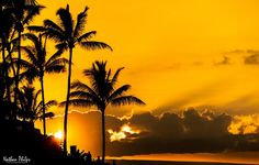 Maui Palms | Hawaii Pictures of the Day