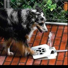 Dog waterer...fresh water at any time!