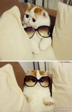 cat trying on sunglasses. genius.