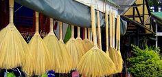 filipino broom [the philippines]
