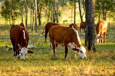 How Grass Fed Beef Can SOLVE Global Warming | Small Footprint Family
