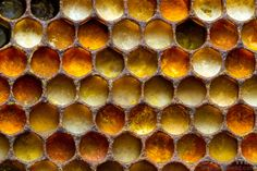 Various colors of pollen indicate different source plant species. natural beekeeping, honey bee pollen, bee nest, plant speci, color, photography patterns in nature, honey bees