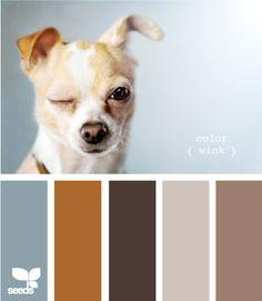 Color Wink
