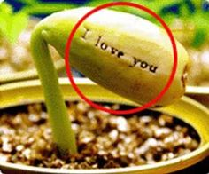 Magic Beans -Special Message sprouts on to Plant