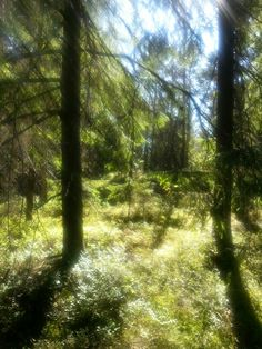A forest in Finland