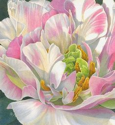 parrot tulip drawing, travel design, travel journals, floral paintings, colored pencil flowers