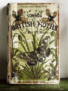 Common British Moths by Rev. J. G. Wood (1870)