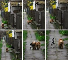 Every day, at the same time, she waits for him. He comes and they go for a walk. Too cute. #dogs #cats