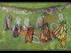 La metamorfosis de los Insectos para niños de Primaria - YouTube