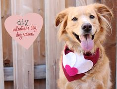 Acute Designs: diy - valentine's day dog scarves
