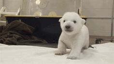 This Video Of Baby Animals Standing For The First Time Is Both Adorable And Inspiring