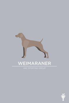 Weimaraner Puppy Training http://tipsfordogs.info/...