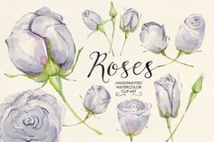 Watercolor clip art lilac roses by GrafikBoutique on Creative Market