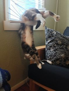Catasters of the Day What Nobody Tells You About Yoga…