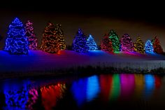 Christmas Trees In Fishers, Indiana, USA by Steve Kinnett