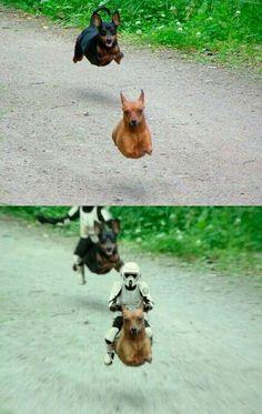 Cute #starwars #humor