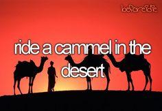 bucketlist, camel, desert, bucket lists