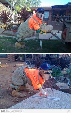 Hard-working dog. http://pinterest.net-pin.info/