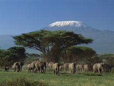Amboseli National Park elephants - Bing Images