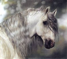Andalusian horse - Pastel Art - Lesley Harrison