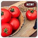 Organic Roni F1 Hybrid Tomato.