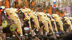 Thrissur Pooram Elephant Festival: One of India's most spectacular festivals involves 30+ colorfully costumed elephants parading through town on their way to the Vadakkunnathan temple.