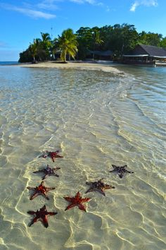 Even the starfish are friendly in Vanuatu, these were willing to pose for me! #travel #islands #Vanuatu #starfish