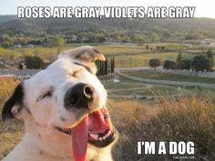 happi dog, rose, animals, funny pics, animal humor