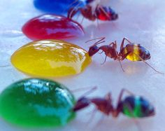 funny animals, funny animal pictures, color, science activities, drink, bug, summer science, ant, science fair