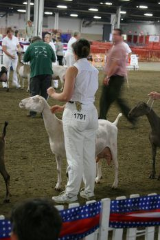 American Dairy Goat Association - Guide to Dairy Goat Shows