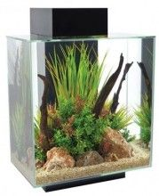 The Fluval EDGE aquariums 46 L