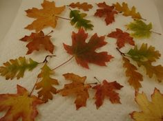 Preserve your favorite Fall leaves!  It really works!