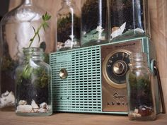 Terrarium collection + vintage radio