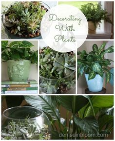 Decorating With Plants – The Beauty and Benefits of Houseplants