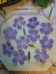 Flower Pressing~