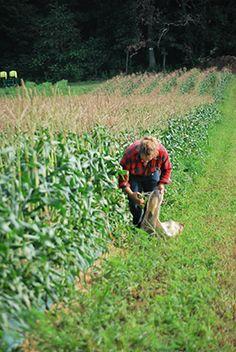 Tim King ... King Corn!   #FarmKings