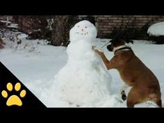 Hilarious dogs love playing in the snow (VIDEO) » DogHeirs | Where Dogs Are Family « Keywords: sledding, snow, snowmen, winter