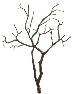 Manzanita branches can be used to make smaller trees or centerpieces.