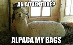 laugh, jokes, adventure time, funni, alpacas, llama, bags, hat, animal